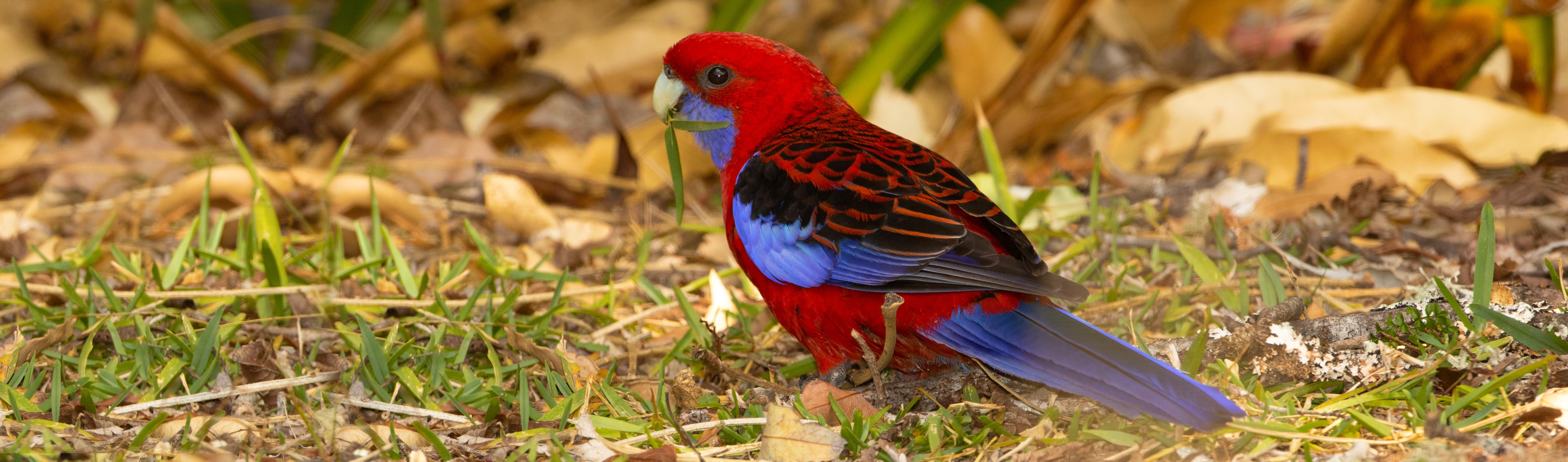 Australia Queensland New South Wales Tasmania Naturescape Tours